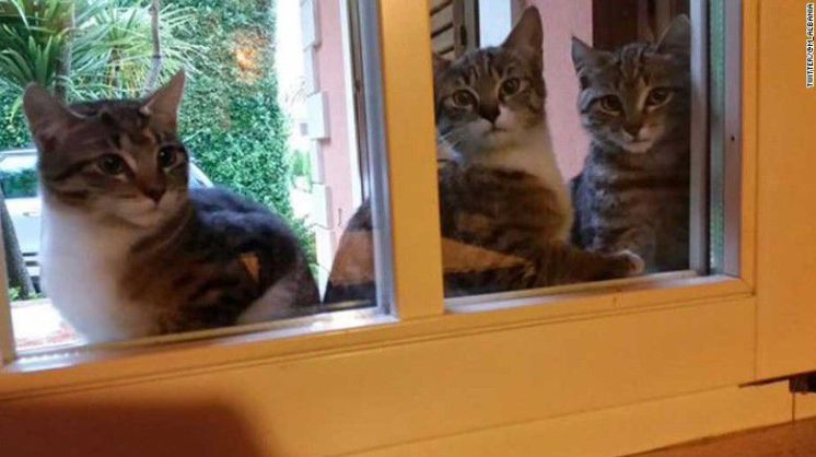 151123115144-brussels-lockdown-cats-exlarge-169