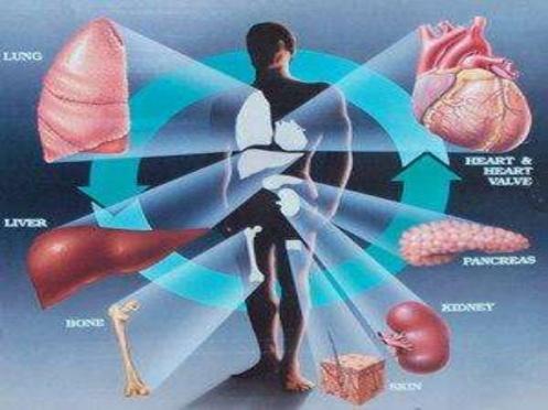 transplante-de-organos-10-728