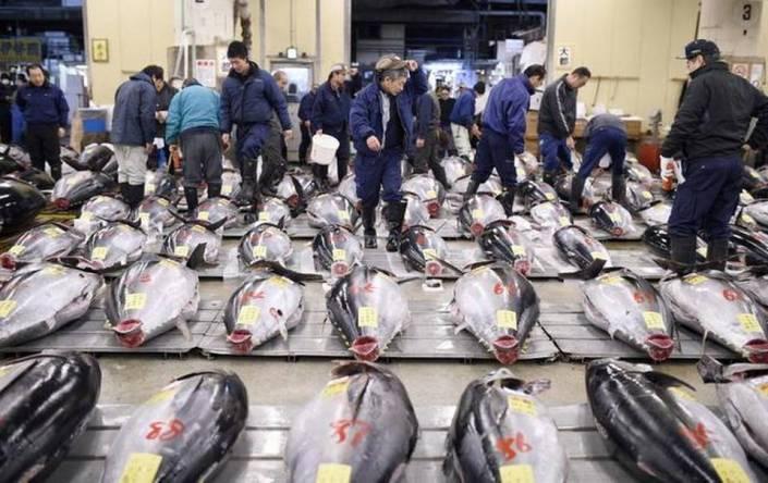 JAPAN TUNA AUCTION