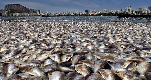 expertos_estudian_causas_de_muerte_masiva_de_sardinas_en_chile