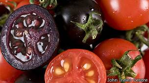 140125031325_sp_tomates_morados_304x171_johninnescentre