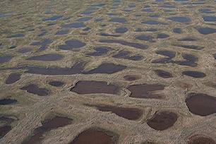 permafrost_-_polygon