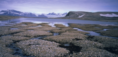 que-es-el-permafrost-y-por-que-disminuye-con-el-cambio-climatico