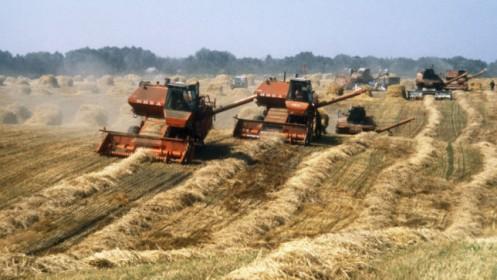 ukraine-corn-644x363
